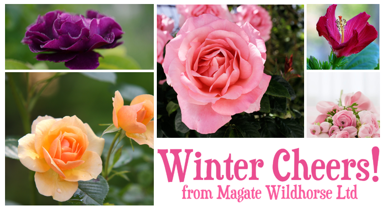 Wintercheers from Magate Wildhorse